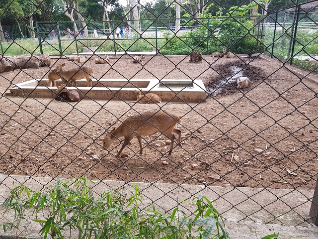 Deers in Bannerghatta National Park